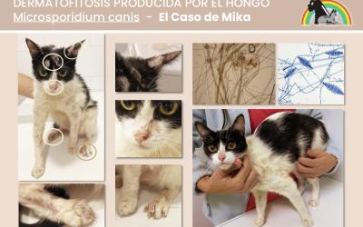 EL CASO DE MIKA